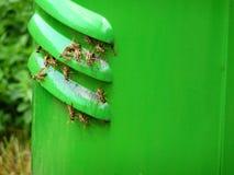 Κίτρινες/μαύρες σφήκες Στοκ φωτογραφία με δικαίωμα ελεύθερης χρήσης