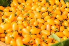 Κίτρινες ντομάτες σταφυλιών, φρέσκες ντομάτες μωρών κερασιών Στοκ Εικόνες