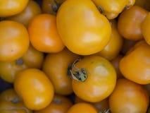 Κίτρινες ντομάτες Στοκ εικόνα με δικαίωμα ελεύθερης χρήσης
