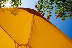 Κίτρινες ομπρέλα και ακτίνες του ήλιου Στοκ Εικόνες