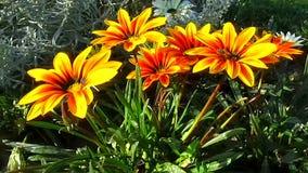 Κίτρινες λουλούδια και μέλισσα απόθεμα βίντεο
