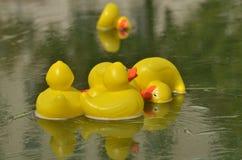 Κίτρινες πάπιες παιχνιδιών στο νερό Στοκ φωτογραφία με δικαίωμα ελεύθερης χρήσης
