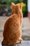 Κίτρινες στροφές γατών στοκ εικόνες με δικαίωμα ελεύθερης χρήσης