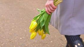 Κίτρινες τουλίπες σε ένα θηλυκό χέρι απόθεμα βίντεο