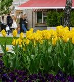 Κίτρινες τουλίπες μετά από τη βροχή σε μια οδό πόλεων με τους περπατώντας ανθρώπους σε μια ημέρα άνοιξη Στοκ εικόνες με δικαίωμα ελεύθερης χρήσης
