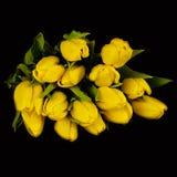Κίτρινες τουλίπες Στοκ φωτογραφίες με δικαίωμα ελεύθερης χρήσης