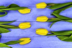 Κίτρινες τουλίπες Στοκ Φωτογραφίες