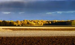 Κίτρινες φθινοπωρινές ημέρες τομέων επιτέλους Στοκ Εικόνες