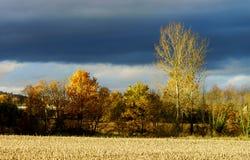 Κίτρινες φθινοπωρινές ημέρες τομέων επιτέλους Στοκ φωτογραφίες με δικαίωμα ελεύθερης χρήσης