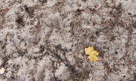 Κίτρινη άδεια φθινοπώρου στην άσπρη σύσταση άμμου στοκ εικόνες