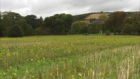 Κίτρινη άνθηση λουλουδιών απόθεμα βίντεο