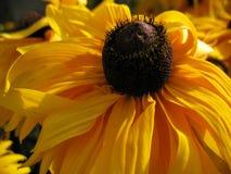 Κίτρινη άνθηση Στοκ φωτογραφία με δικαίωμα ελεύθερης χρήσης