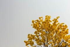 Κίτρινη άνθιση λουλουδιών την άνοιξη Στοκ φωτογραφία με δικαίωμα ελεύθερης χρήσης