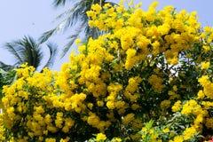 κίτρινη άνθιση λουλουδιών Στοκ Εικόνες