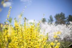 Κίτρινη άνοιξη Στοκ φωτογραφία με δικαίωμα ελεύθερης χρήσης
