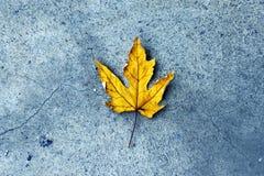 Κίτρινη άδεια στο πεζοδρόμιο το φθινόπωρο Στοκ εικόνες με δικαίωμα ελεύθερης χρήσης