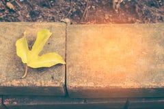 Κίτρινη άδεια λωτού ` s στα παλαιά τούβλα Στοκ εικόνα με δικαίωμα ελεύθερης χρήσης