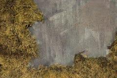 Κίτρινη ίνα σύστασης βρύου υποβάθρου με το τσιμέντο στοκ φωτογραφίες με δικαίωμα ελεύθερης χρήσης