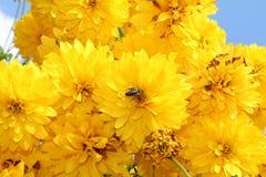 Κίτρινη ανασκόπηση λουλουδιών Στοκ φωτογραφία με δικαίωμα ελεύθερης χρήσης
