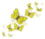 Κίτρινη ανασκόπηση πεταλούδων Απεικόνιση αποθεμάτων