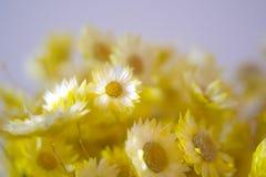 Κίτρινη ανθοδέσμη λουλουδιών με το θολωμένο υπόβαθρο στοκ φωτογραφίες