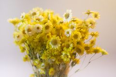 Κίτρινη ανθοδέσμη λουλουδιών Στοκ φωτογραφία με δικαίωμα ελεύθερης χρήσης