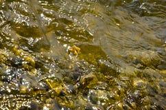 Κίτρινη αντανάκλαση νερού με την ενιαία άδεια στοκ φωτογραφία με δικαίωμα ελεύθερης χρήσης