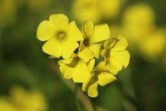 Κίτρινη απόλαυση Στοκ εικόνα με δικαίωμα ελεύθερης χρήσης