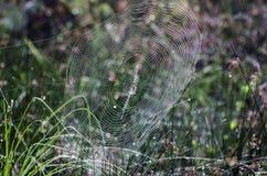 Κίτρινη αράχνη φερμουάρ κήπων Ιστού αραχνών Στοκ Εικόνα