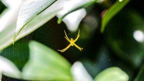 Κίτρινη αράχνη Στοκ φωτογραφίες με δικαίωμα ελεύθερης χρήσης