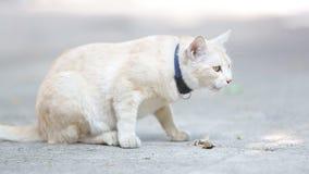 Κίτρινη γάτα αλεών που τρώει τα κονσερβοποιημένα τρόφιμα σε ένα πεζοδρόμιο απόθεμα βίντεο