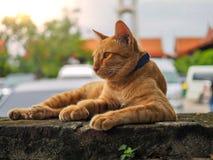 Κίτρινη γάτα που βρίσκεται στον παλαιό τοίχο στοκ φωτογραφία