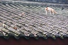 Κίτρινη γάτα σε μια κινεζική παραδοσιακή στέγη Στοκ φωτογραφία με δικαίωμα ελεύθερης χρήσης