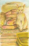 Κίτρινη γάτα Στοκ εικόνα με δικαίωμα ελεύθερης χρήσης