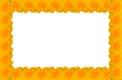 Κίτρινη ευώδης ορχιδέα μελιού απεικόνιση αποθεμάτων