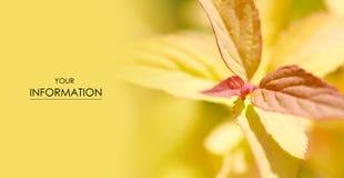 Κίτρινη θαμπάδα φωτογραφιών φύλλων μακρο στον ήλιο Στοκ εικόνες με δικαίωμα ελεύθερης χρήσης