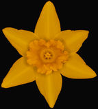 Κίτρινη θεά Στοκ φωτογραφία με δικαίωμα ελεύθερης χρήσης