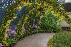 Κίτρινη διάβαση πεζών σηράγγων ορχιδεών και δέντρων κήπων στο πάρκο Στοκ φωτογραφία με δικαίωμα ελεύθερης χρήσης