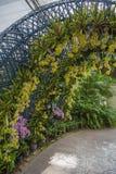 Κίτρινη διάβαση πεζών σηράγγων ορχιδεών και δέντρων κήπων στο πάρκο Στοκ Εικόνες