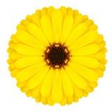 Κίτρινη διακόσμηση λουλουδιών Mandala Σχέδιο καλειδοσκόπιων που απομονώνεται Στοκ φωτογραφία με δικαίωμα ελεύθερης χρήσης