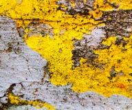 Κίτρινη και γκρίζα σύσταση ενός υποβάθρου grunge μεγάλη σύσταση Χρήσιμος ως σκηνικό στοκ φωτογραφία