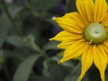 Κίτρινη κινηματογράφηση σε πρώτο πλάνο λουλουδιών στοκ εικόνα
