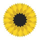 Κίτρινη κινηματογράφηση σε πρώτο πλάνο ηλίανθων που απομονώνεται Στοκ φωτογραφίες με δικαίωμα ελεύθερης χρήσης