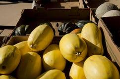 Κίτρινη κολοκύνθη μακαρονιών στοκ φωτογραφίες με δικαίωμα ελεύθερης χρήσης