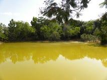 Κίτρινη λίμνη χρώματος στο δάσος με την αντανάκλαση των δέντρων Στοκ Φωτογραφίες