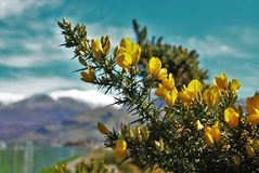 Κίτρινη μακροεντολή λουλουδιών Στοκ φωτογραφία με δικαίωμα ελεύθερης χρήσης
