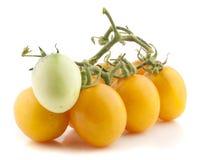 Κίτρινη ντομάτα Στοκ εικόνες με δικαίωμα ελεύθερης χρήσης