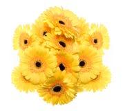 Κίτρινη ομάδα gerbera Στοκ εικόνα με δικαίωμα ελεύθερης χρήσης