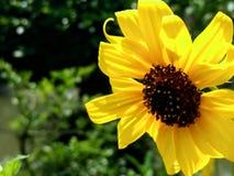 Κίτρινη ομορφιά Στοκ εικόνες με δικαίωμα ελεύθερης χρήσης