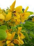 Κίτρινη ομορφιά Στοκ φωτογραφία με δικαίωμα ελεύθερης χρήσης
